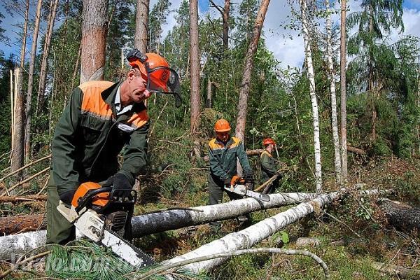 Вахта в лес братск вакансии